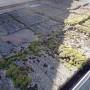 セメント瓦の雨漏り 大田店
